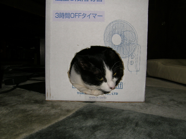 あいの箱.JPG