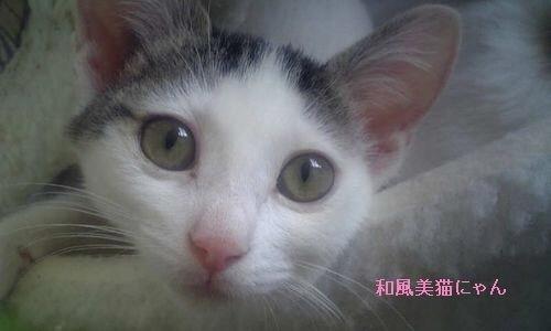 yukicyann2.jpg