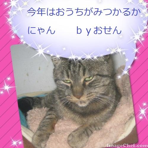 おせんちゃん.jpg