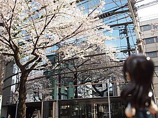 窓に映って桜が2倍(・∀・)