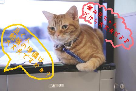 豆太郎20110224