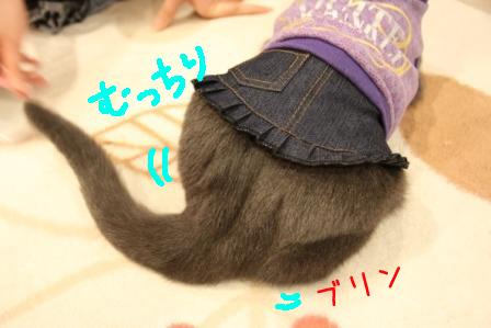 ぶり20110225