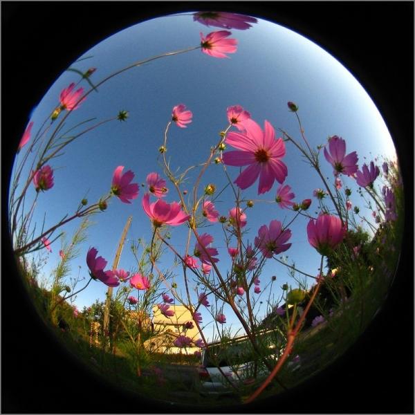 20140922-01-IMG_0660.jpg
