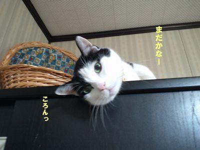 DCF00049_20101112194148.jpg