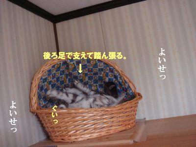 DSC05703_20101003034729.jpg