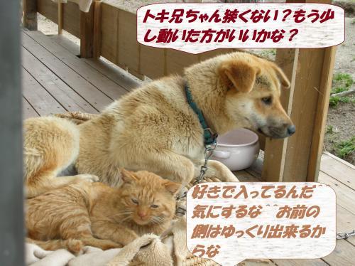 DSCN0417_convert_20131209064610.jpg