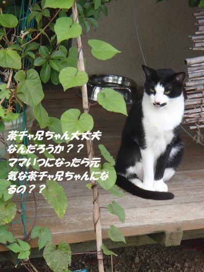 P9151769_convert_20140916110355.jpg