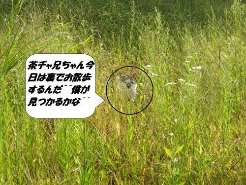 P9151773_convert_20140916110441.jpg