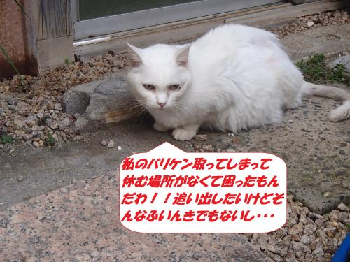 P9151777_convert_20140916110537.jpg