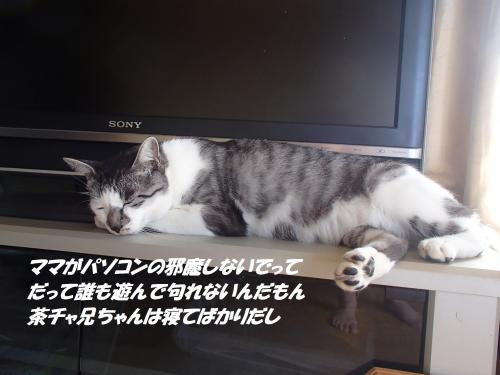 P9161780_convert_20140917100431.jpg