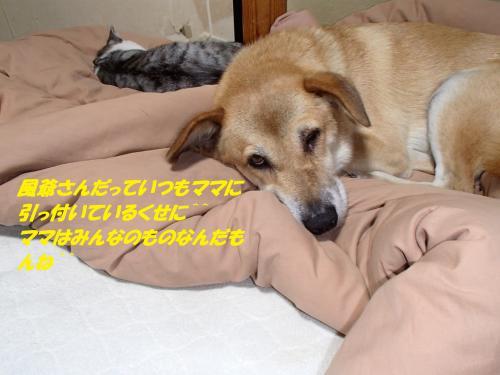 P9171788_convert_20140918145024.jpg