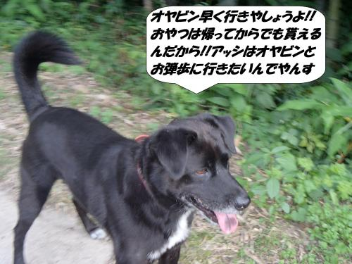 P9221821_convert_20140924090749.jpg