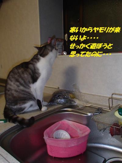 P9241853_convert_20140927100310.jpg