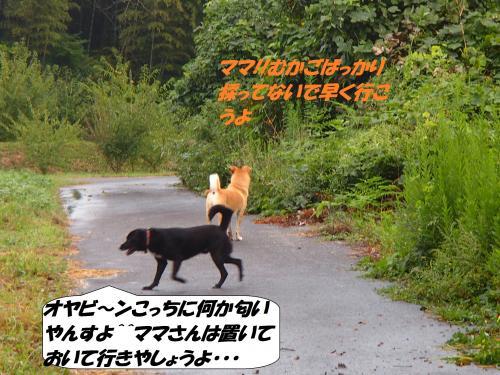 P9251860_convert_20140926143544.jpg
