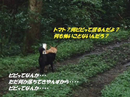 P9251861_convert_20140926145930.jpg