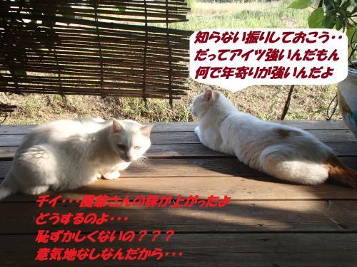 P9281878_convert_20140930130047.jpg