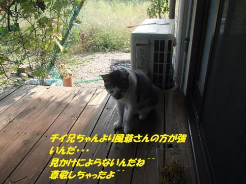 P9281879_convert_20140930130101.jpg