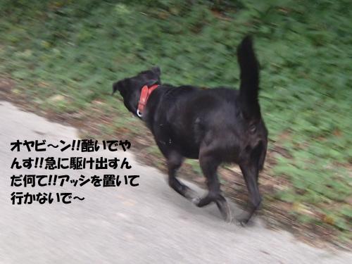 PA011897_convert_20141002195448.jpg