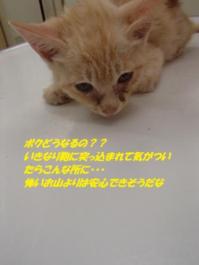 PA021954_convert_20141003135209.jpg
