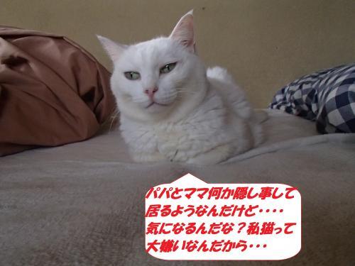 PA031957_convert_20141004130804.jpg
