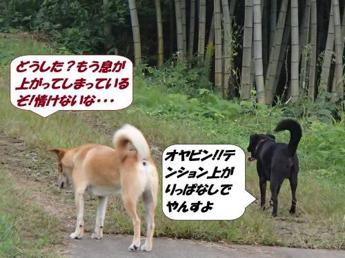 PA031961_convert_20141005142039.jpg