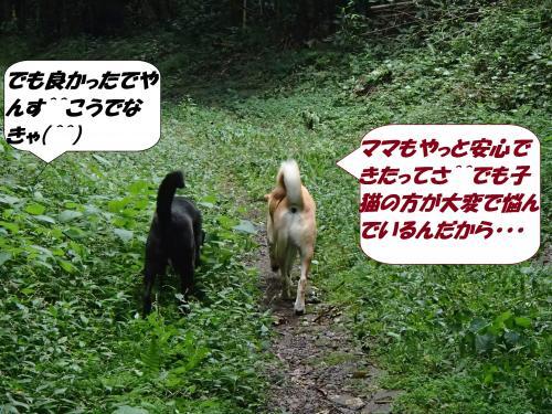 PA031964_convert_20141005142107.jpg