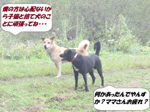 PA031970_convert_20141005142121.jpg