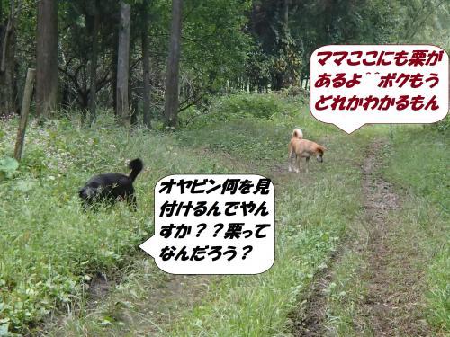 PA031972_convert_20141005142134.jpg