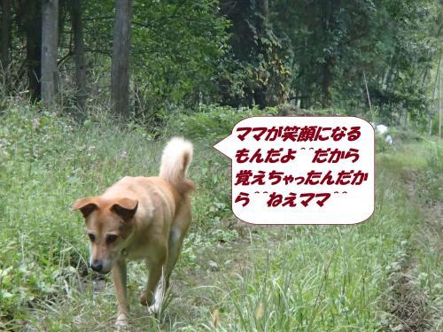 PA031973_convert_20141005142148.jpg
