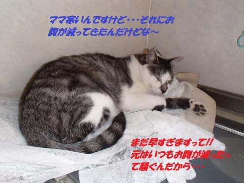 PA102068_convert_20141015124552.jpg