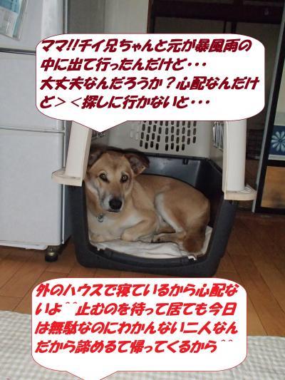 PA122074_convert_20141014093350.jpg