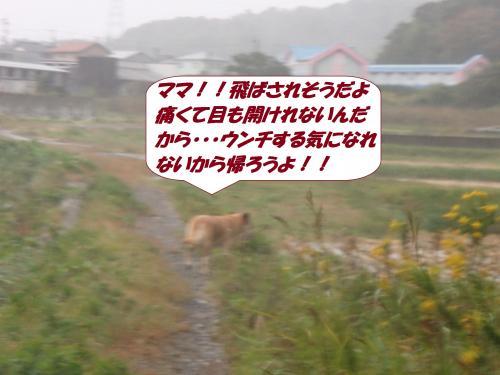 PA132077_convert_20141014093455.jpg