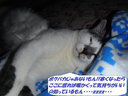 PA142091_convert_20141016103406.jpg