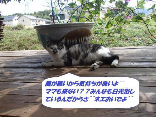 PA152093_convert_20141017144013.jpg