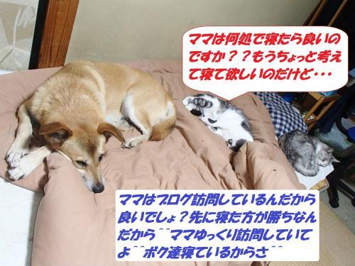 PA182173_convert_20141019132819.jpg