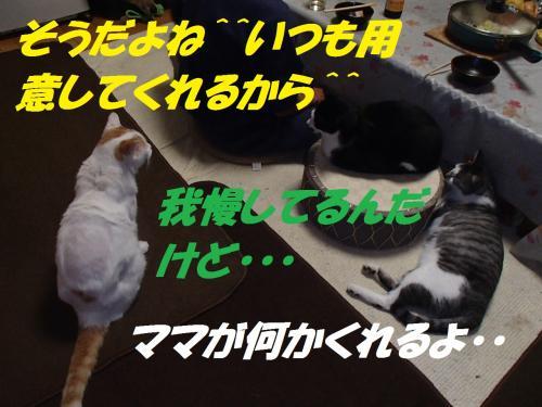 PA265629_convert_20131121095716.jpg