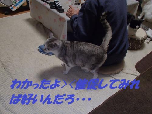 PA265630_convert_20131121095729.jpg