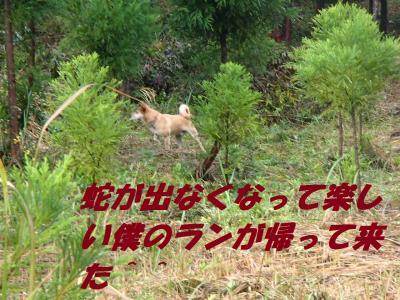 PB125877_convert_20131114094515.jpg