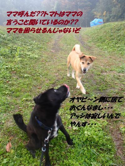 PB175947_convert_20131119080258.jpg