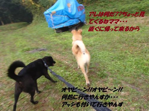 PB175949_convert_20131119080337.jpg