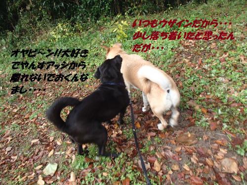 PB175950_convert_20131119080351.jpg