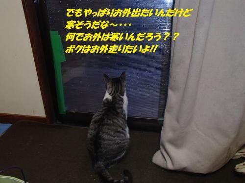PB195954_convert_20131120075542.jpg