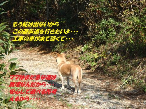 PB215962_convert_20131122073309.jpg