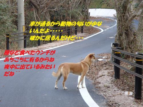 PB215969_convert_20131122073624.jpg