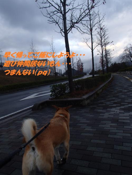 PB225984_convert_20131123073259.jpg