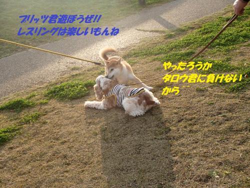 PB236003_convert_20131126041049.jpg