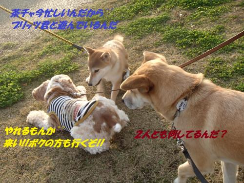 PB236004_convert_20131126041104.jpg