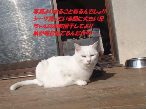 PB246020_convert_20131127054053.jpg