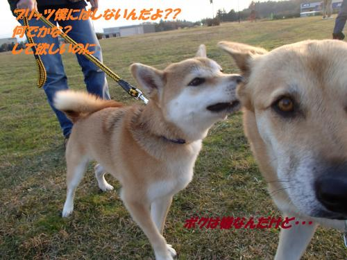 PB246028_convert_20131127054228.jpg