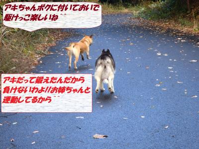 PB286073_convert_20131201072138.jpg